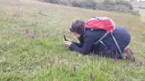 Kath photographing green-winged orchids (Anacamptis morio) in Dorset